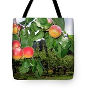 Okanagan Apricots Tote Bag by Will Borden