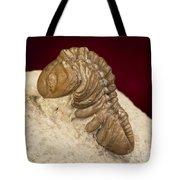 Oklahoma Trilobite. Tote Bag