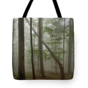 Old Beech Forest Tote Bag