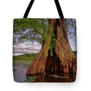 Old Cypress Trunk Tote Bag