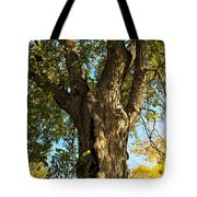 Old Elm Trunk In The Park Tote Bag