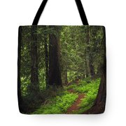 Old Growth Cedars Tote Bag