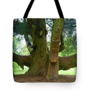 Old Huge Tree Tote Bag