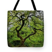 Old Japanese Maple Tree Tote Bag