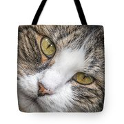 Old Kitty Tote Bag