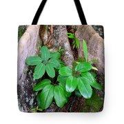 Old Life New Life Tote Bag