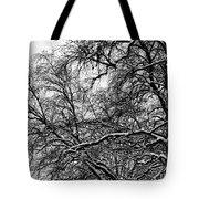 Old Tree 6 Tote Bag