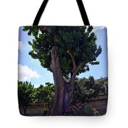 Old Tree In Palermo Tote Bag