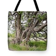 Old Weathered Tree Tote Bag