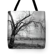 Old Winter Tree Grayscale Tote Bag