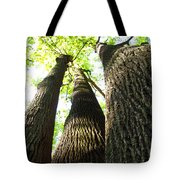 Oldgrowth Tulip Tree Tote Bag