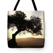 Olive At Sunset Tote Bag