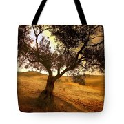 Olive Tree Dawn Tote Bag