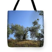 Olive Trees Near Olvera Tote Bag