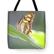 On A Leaf Tote Bag by T A Davies