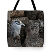On The Rocks - Yellow-crowned Night Heron Tote Bag