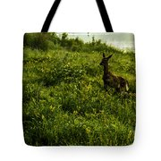 Among The Golden Rod Tote Bag