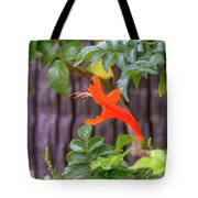 One Lone Flower Remains On The Cape Honeysuckle Tote Bag