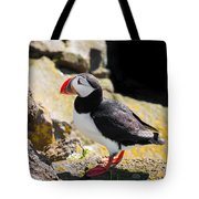 One Puffin In Iceland Tote Bag