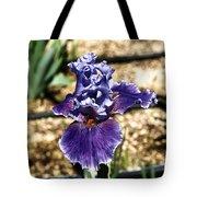 One Sole Iris In Bloom Tote Bag
