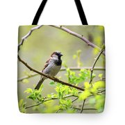 One Sparrow Tote Bag