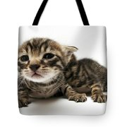 One Week Old Kittens Tote Bag