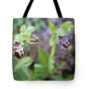 Ophrys Kotschyi Wild Orchid Plant. Tote Bag