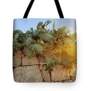 Opuntia Cactus In The Sunset Tote Bag