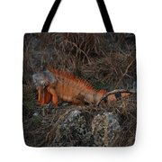 Oranage Iguana Tote Bag