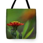 Orange Agoseris Tote Bag