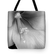 Orange Amaryllis Hippeastrum Bloom 12-29-10 Bw Tote Bag