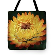 Orange And Yellow Strawflower Tote Bag