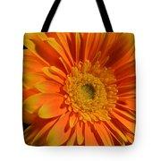 Orange And Yellow Tip Gerbera Daisy Tote Bag