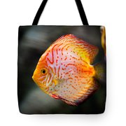 Orange Aquarium Fish In Zoo Tote Bag