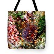 Orange Ball Corallimorph Anemone Tote Bag