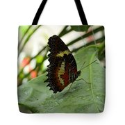 Orange Black Butterfly Tote Bag