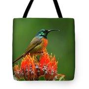 Orange-breasted Sunbird On Protea Blossom Tote Bag