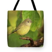 Orange Crowned Warbler Tote Bag