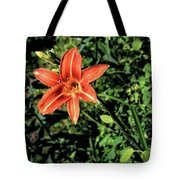 Orange Day Lily 1 Tote Bag