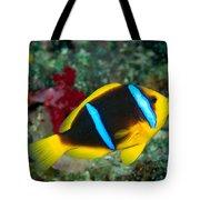 Orange-fin Anemonefish Tote Bag