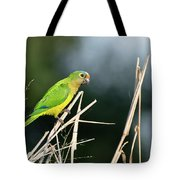 Orange-fronted Parakeet Tote Bag