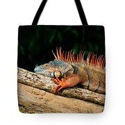 Orange Iguana Close Up Tote Bag