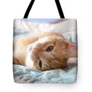 Orange Kitten Tote Bag