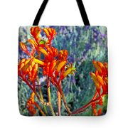 Yellow-orange Kangaroo Paws At Pilgrim Place In Claremont-california- Tote Bag