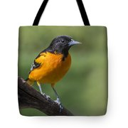 Orange Oriole Tote Bag