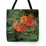 Orange Poinciana Tree Tote Bag
