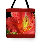 Orange-red Day Lily Tote Bag
