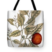 Orange Tree, 1735 Tote Bag