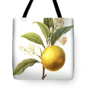 Orange Tree Tote Bag