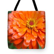 Orange Zinnia After A Rain Tote Bag